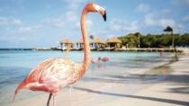 Fiestas Patrias 2019 en Aruba Todo Incluido