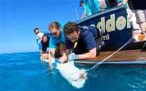 Riu Palace Paradise Island Nassau 4 Dias