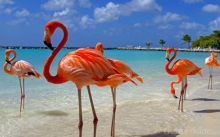 HOTEL TAMARIJN TODO INCLUIDO EN ISLA DE ARUBA