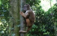 ECO AMAZONIA LODGE TAMBOPATA 2 DIAS