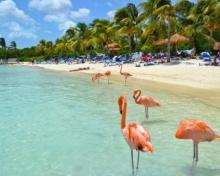 Fiestas Patrias en Aruba en Hotel Barcelo - 4Dias