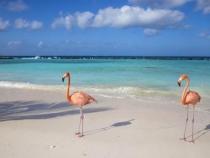 Vacaciones en Aruba 5 Dias 4 Noches con Avianca
